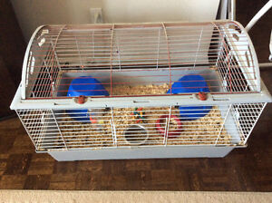 Two brother Guinea pigs