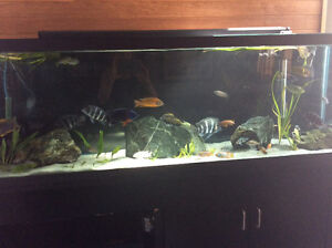 135 gal tank, stand & lids only