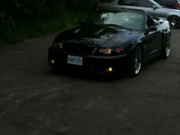 THE REAL DEAL 2003 SVT COBRA TERMINATOR CONVERTIBLE