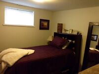 **newly renovated, southside 1 bedroom basement suite**