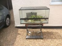 Large complete vivarium set up with extras