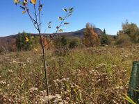 Terrain 15 acres à Orford. Vue sur les monts Chauve et Orford