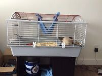 4 RATS + cage
