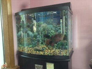Fish & and fish tank for sale