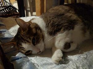 Rescue sweet kitty for adoption Oakville / Halton Region Toronto (GTA) image 4