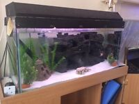 3ft fish tank with filter, lighting and decorations.