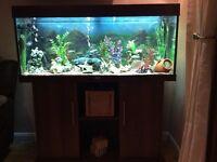 4ft jewel aquarium & stand