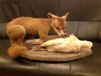 taxidermy fox and pheasant (ornament ,animal , farm,hunting )
