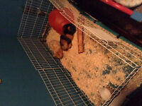 Small animal cage for sale or trade