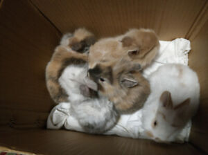 baby bunnies to take home