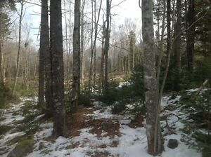 25.94 acres for sale near Digby