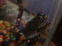 Free Fire Belly Toad with Tank and Accessories