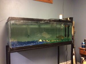 65 gallon fish tank with stand and filter