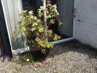 Garden plants and pots
