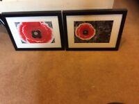 Framed poppy prints