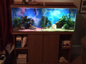 Trading 55 gallon tank and stand