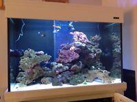 Marine Aquarium Setup, Aquaone reef 300 White