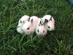 Cute bunnies for sale