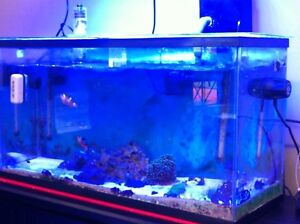 33 gallon saltwater tank with fish and corals