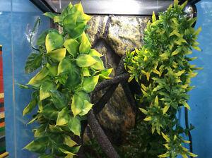 Terrarium gecko complet