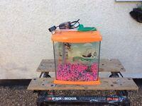 Cool water aquarium fish tank set up