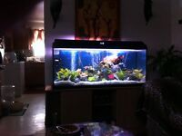 Beautiful 66 gallon tank with stand