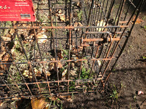 Pet cage dog cage little surface rusty solid , only 25 dollars Kitchener / Waterloo Kitchener Area image 4