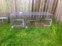 Cages for poultry or rabbits