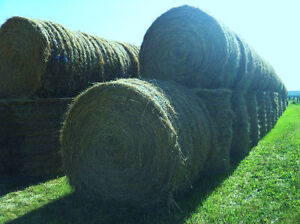 Large Round Bales-super quality