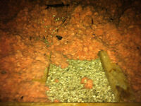 Vermiculite / Asbestos Insulation Removal