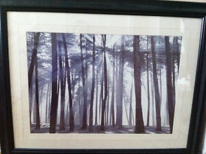 Modern Forest picture with black frame