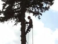Élagage, émondage, abattage, déchiquetage de branche.