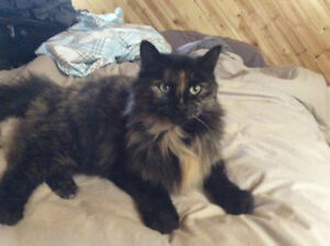 3 beautiful female cats looking for homes