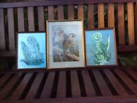 Three Pictures Of OWLS