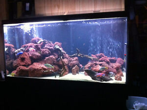 30 gallon Tank INCL ALL accessories to get started!!!
