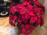 Red gorgeous Poinsettia in black Urn