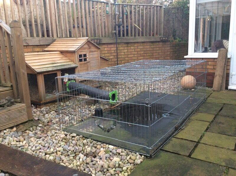 Rabbit Hutch with tunnel connecting to large run | in ...
