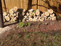 Tree trunk can be used for firewood free to pick up.