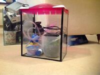 20l Glass Fishtank with accessories