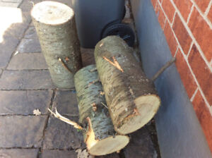 CEDAR TREE LOGS FOR FREE