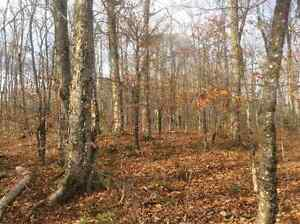 Recreational Woodlot in Teahans Corner, NB - Approximately  100