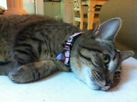 Young Adorable Cat needs new Home