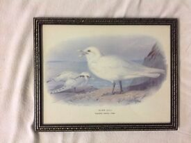 Set of 6 bird pictures