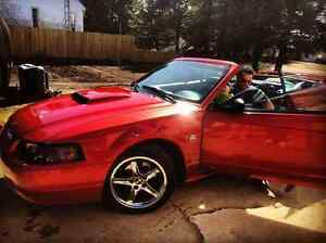 2004  Mustang  40 edition limited
