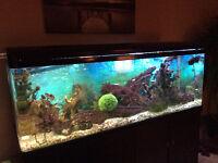 Must be seen elegant  175 gallon fresh water aquarium plus acces
