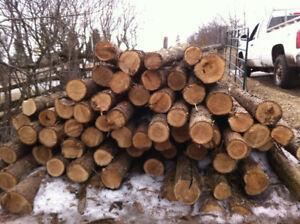 100 cedar posts 4-5inch top diameter
