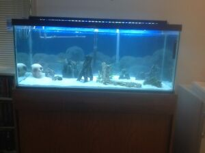 80 Gallon Fish Tank & Stand Campbell River Comox Valley Area image 1