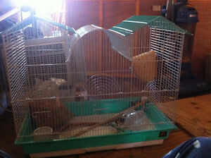 Starter bird cage with accessories