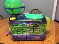 Teddy bear hamster and cage