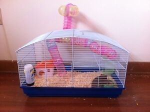 Hamster and accessories